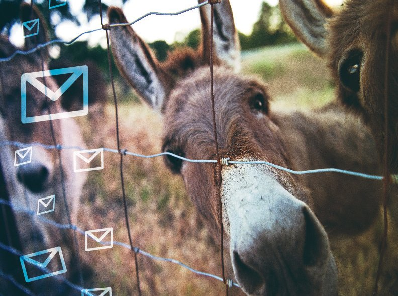 Don't Forget to Wash Your Mule(and download the New '2021 Email Hygiene and Verification Trends and Benchmarks Report')